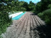 Plantation de pdt sous billon