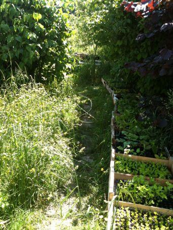 Chemin des semis