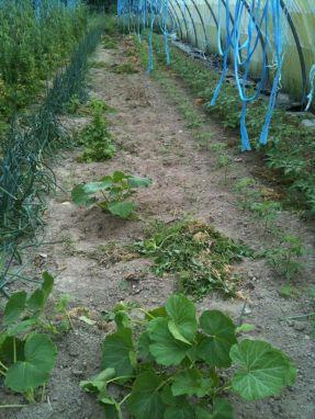 Désherbage pour plantation tomates