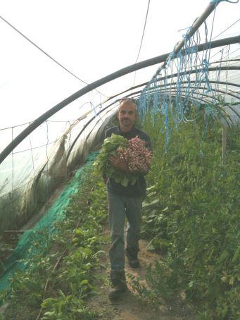 Récolte de radis avec Joseph
