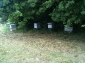 Under the ruches