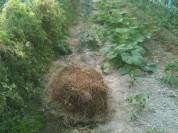 Tortue de mulch