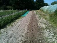 Plantation choux de Brussels