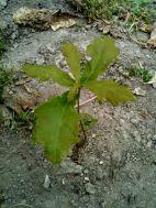 Un arbre dans la serre