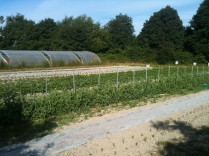 champs entre les serres - 1er juillet