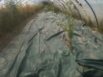 Bâche et préparation terrain pour engrais vert