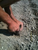 Plantation des poireaux avec plantoir