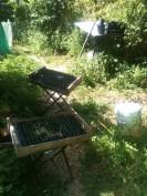 Semis de poireau - juillet