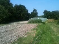 grand champs - petit champs - serre tomates