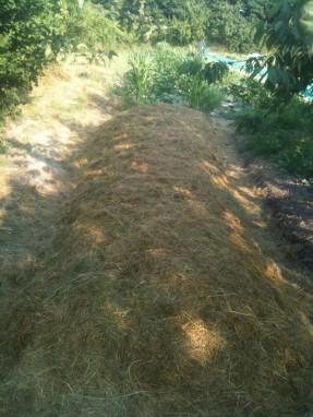 Butte - apport de mulch - fin