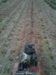 Préparation planche pour semis de haricots