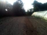 Petit champs - semis de haricots