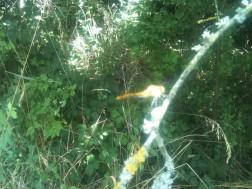 Libellule sur la branche