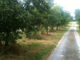 Chemin des fruitiers