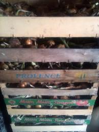 Stockage oignons