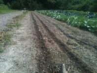 Sillons pour semis