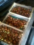 Stockage des oignons