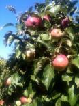 Pommes...