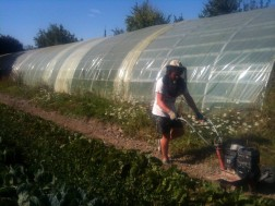 Préparation d'un planche par Hari pour plantation de mâche