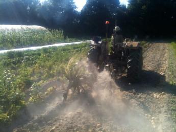 Arracheuse de pommes de terre en action