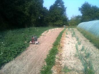 Planches et semis direct des radis