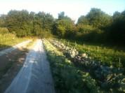 Jardin près du verger