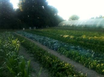 Jardin au 1er août