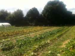 Jardin entre les serres - août