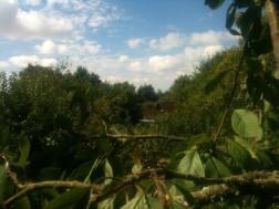 Du haut du prunier