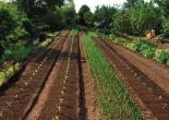 microferme maraichage permaculture
