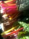 Bette-cardes de couleurs
