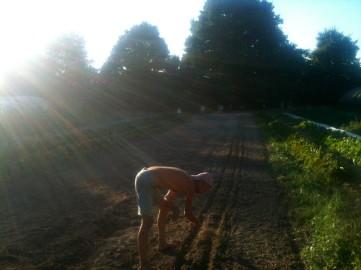 Semis direct de radis