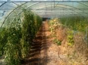 Serre route - planche pour semis