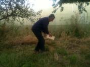Cueillette des prunes avec Pada