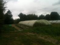 Serre tomates - septembre