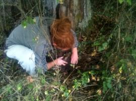 Etude du sol - observations en sous bois