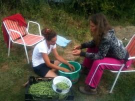Amandine et Estelle - Ecossage des haricots