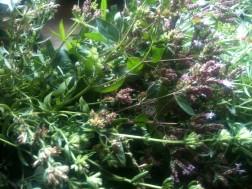 Bouquet d'aromatiques