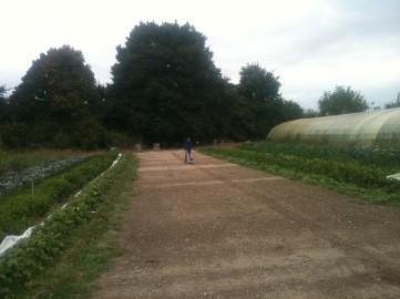 Joseph - préparation planche semis radis noirs