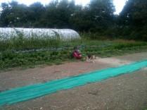 Estelle & Cannelle - cueillette des haricots