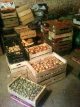 Stock - oignons, prunes, tomates, ...