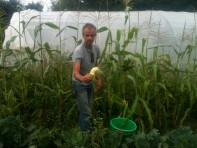 Joseph - maïs doux