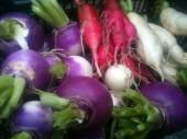 Navets, radis blanc, noirs, roses