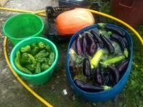 Poivrons, aubergines, courgettes au bain