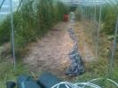 Binage des épinards