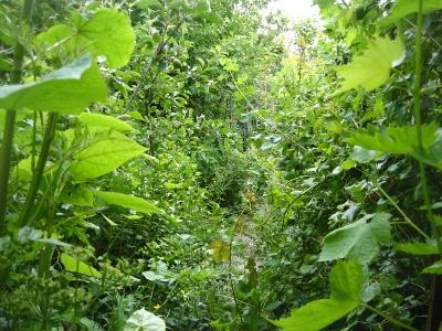 Fabuleux jardin urbain 1800 m2 en permaculture mouscron en belgique le petit saint marthien - Jardin potager bio saint denis ...