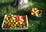 Week-end pomme