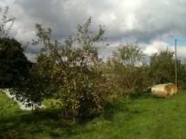 Pommes bourdon
