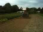 Passage de la herse après semis engrais vert