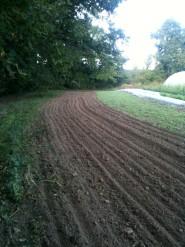 Petit champs serre - engrais vert
